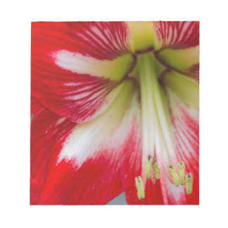 amaryllis flower in the garden memo notepad