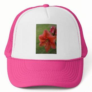 Amaryllis zazzle_hat