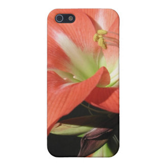 Amaryllis Hippeastrum Flowers Isolated On Black Cover For iPhone SE/5/5s