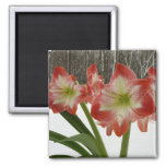 Amaryllis in Snow I Red Holiday Winter Floral 2 Inch Square Magnet