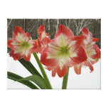 Amaryllis in Snow I Red Holiday Winter Floral Canvas Print