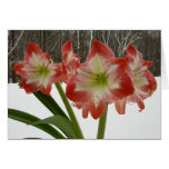 Amaryllis in Snow I Red Holiday Winter Floral Card