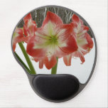 Amaryllis in snow i for Amaryllis gel