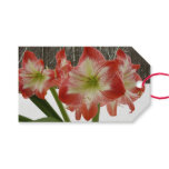 Amaryllis in Snow I Red Holiday Winter Floral Gift Tags