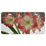 Amaryllis in Snow I Red Holiday Winter Floral License Plate