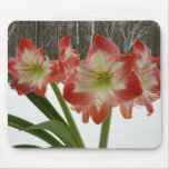 Amaryllis in Snow I Red Holiday Winter Floral Mouse Pad
