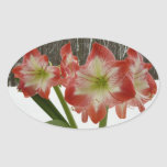 Amaryllis in Snow I Red Holiday Winter Floral Oval Sticker