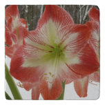 Amaryllis in Snow I Red Holiday Winter Floral Trivet