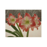 Amaryllis in Snow I Red Holiday Winter Floral Wood Poster
