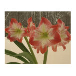 Amaryllis in Snow I Red Holiday Winter Floral Wood Wall Decor