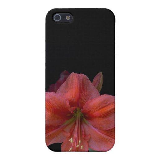 Amaryllis iPhone 5 Cover