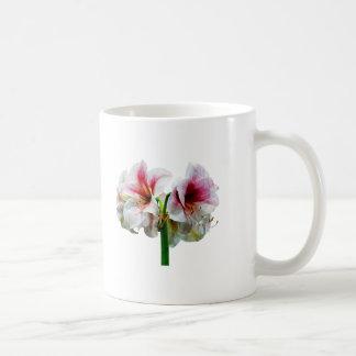 Amaryllis Novella Coffee Mug