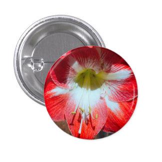 Amaryllis Pin Flower Gift