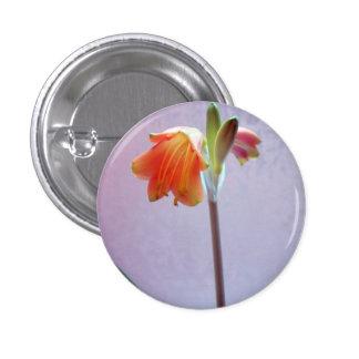 amaryllis pinback button