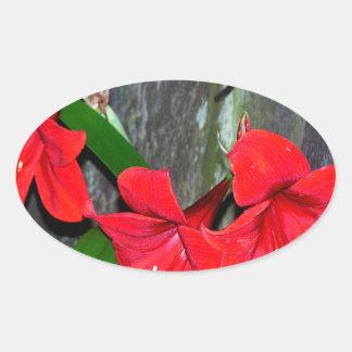 Amaryllis rojo por una cerca vieja pegatina ovalada