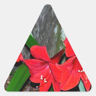 Amaryllis rojo por una cerca vieja pegatina triangular