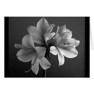 amaryllis tarjeton