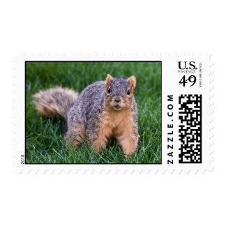 Amazement Stamps