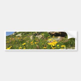 Amazing! Alpine flowers Car Bumper Sticker