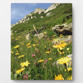 Amazing! Alpine flowers Photo Plaque
