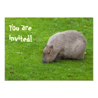 Amazing Animal Capybara 5x7 Paper Invitation Card