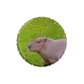 Amazing Animal Capybara Jelly Belly Candy Tin