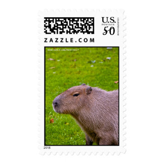 Amazing Animal Capybara Postage