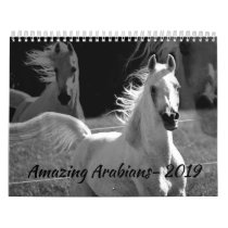 Amazing Arabians- a 2019 Calendar