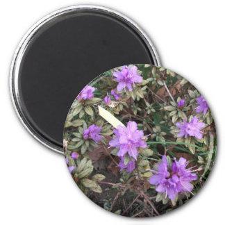 Amazing Azalea in Soft Plastic 2 Inch Round Magnet