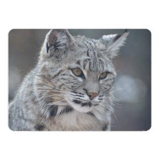 Amazing Bobcat Card
