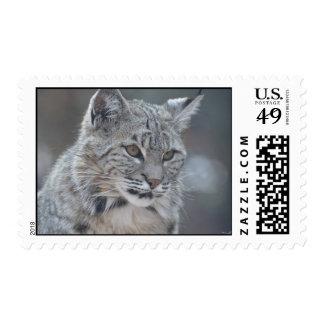 Amazing Bobcat Postage Stamp
