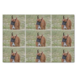 "Amazing Boxer Dog 10"" X 15"" Tissue Paper"
