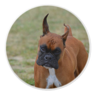 Amazing Boxer Dog Ceramic Knob