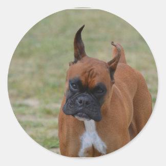 Amazing Boxer Dog Classic Round Sticker