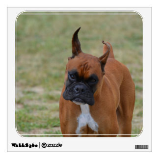 Amazing Boxer Dog Wall Decals