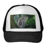 Amazing Caligo Eurilochus Butterfly Hats