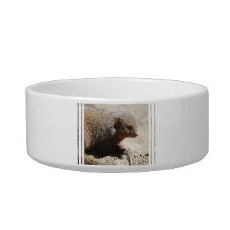 Amazing Dwarf Mongoose Bowl