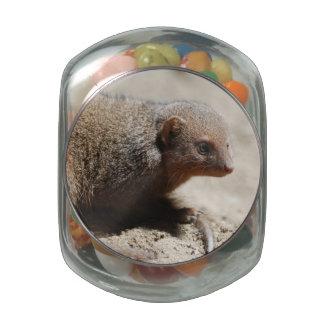 Amazing Dwarf Mongoose Glass Candy Jars