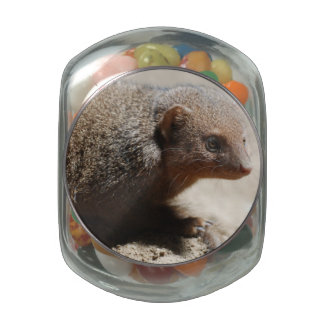 Amazing Dwarf Mongoose Jelly Belly Candy Jar