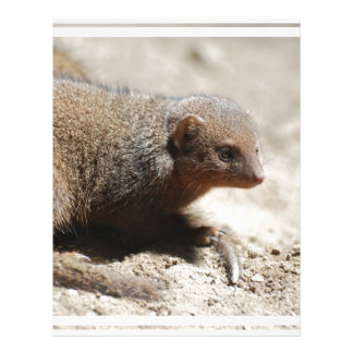 Amazing Dwarf Mongoose Letterhead