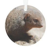 Amazing Dwarf Mongoose Ornament