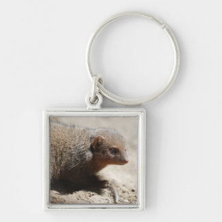 Amazing Dwarf Mongoose Silver-Colored Square Keychain