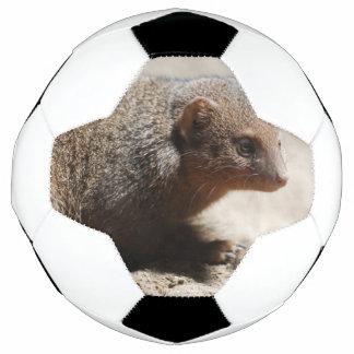 Amazing Dwarf Mongoose Soccer Ball