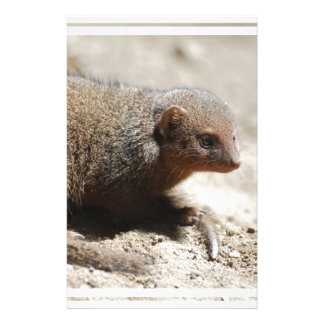 Amazing Dwarf Mongoose Stationery