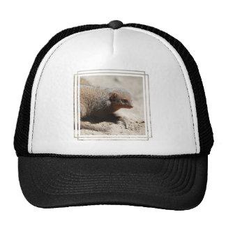 Amazing Dwarf Mongoose Trucker Hat