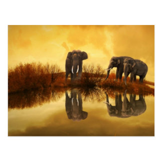 Amazing Elephant Sunset Postcard