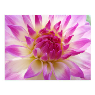 Amazing Floral Dahlia Flowers post cards Summer