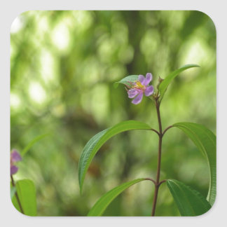 Amazing flower in the world square sticker