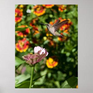 Amazing Hummingbird Photo Poster