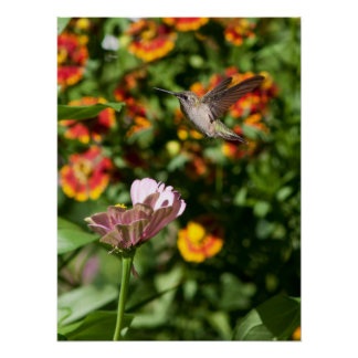 Amazing Hummingbird Photo Print